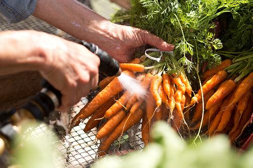 veggielutionCarrots